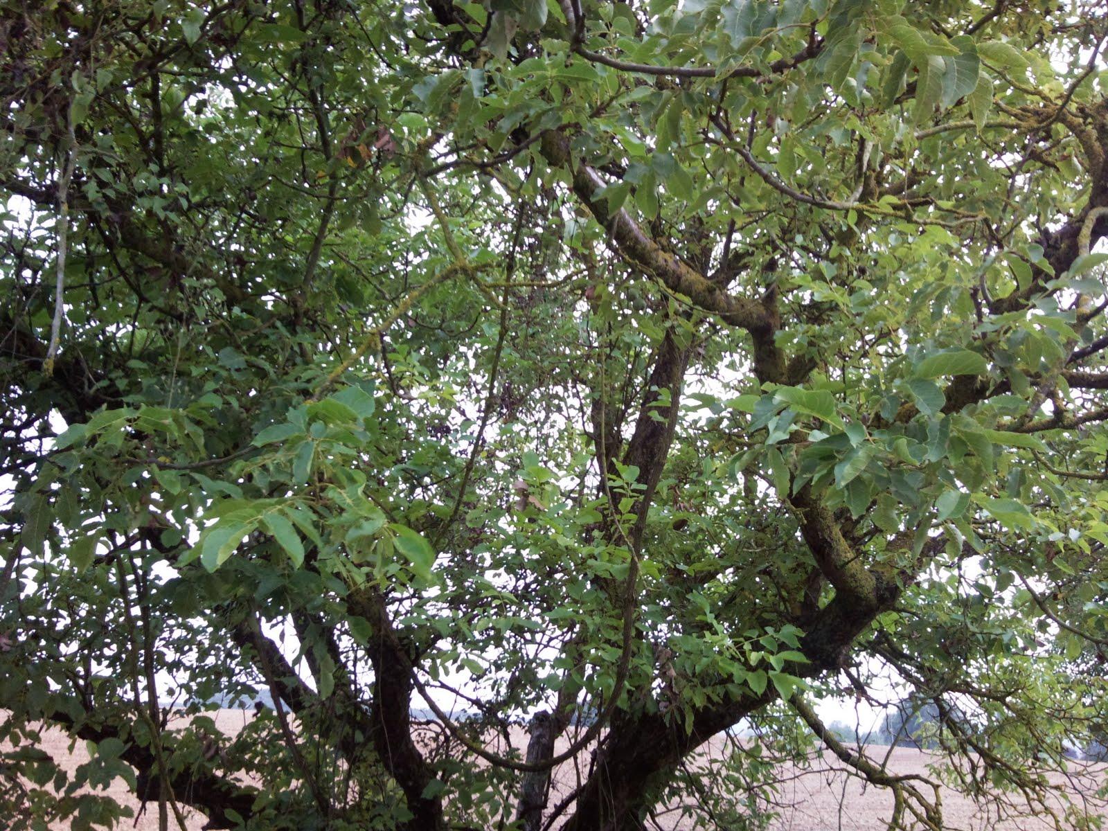 Struttura dell albero verde blu garden for Chioma albero