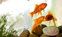un_acquario_a_misura_di_pesce